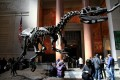 Dinozaur w Muzeum Historii Naturalnej