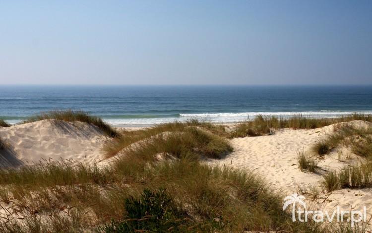 Widok na ocean z parku naturalnego Reserva Natural das Dunas de Sao Jacinto niedaleko Aveiro